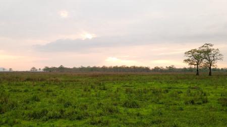 Kaziranga NP Western Range Scenery