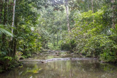 Halmahera Limestone Creek Aketajawe Lolobata