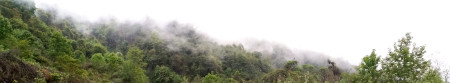 Eaglenest Fog