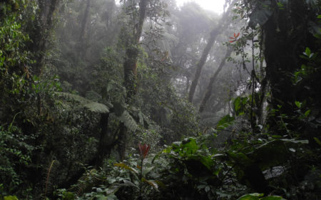 Manu Cloud Forest