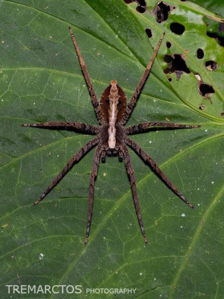 Spider at Maquipucuna