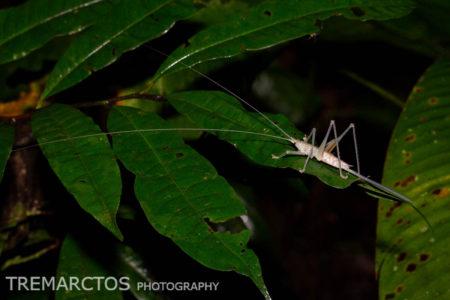 Insect at Shiripuno