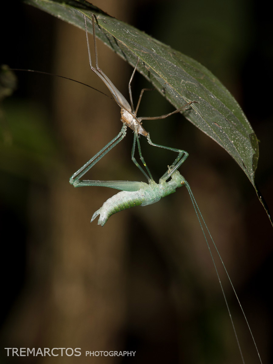 Molting Insect